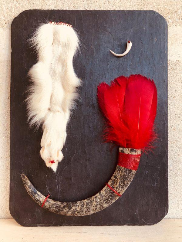 Patte de renard, corne, griffe porcel., plumes sur ardoise
